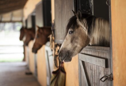 meditation-for-equestrians-berni-k